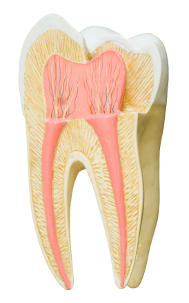 Why Does Enamel Change Color Over Time?